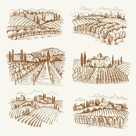 Paesaggio dei vigneti. Illustrazioni disegnate a mano di vettore delle vigne del vino del villaggio dell'annata della Francia o dell'Italia. Disegno del paesaggio della cantina, uva da agricoltura agricola Vettoriali