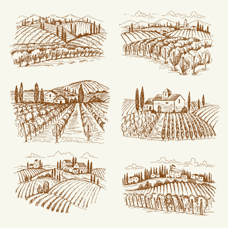 Vineyard landscape. France or italy vintage village wine vineyards vector hand drawn illustrations. Winery landscape drawing, farm agriculture grape Ilustração