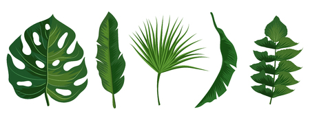 Tropical exotic leaves vector isolated on white background. Illustration of summer leaf palm collection 向量圖像