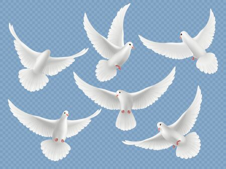 Realistic doves. White freedom flying birds pigeons religion symbols vector pictures collection. Set of pigeon and white dove freedom illustration 写真素材 - 131385350