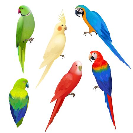 Parrots realistic. Wildlife flight exotic colored birds beautiful amazonia tropical life vector parrots illustrations. Illustration parrot bird realistic, wildlife tropical animal Ilustracja
