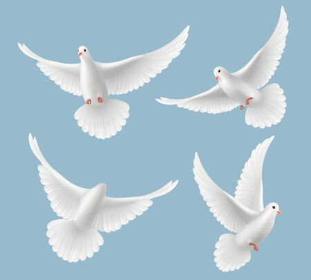 White pigeons. Dove love flying birds in sky symbols of freedom and wedding vector realistic pictures. Pigeon bird, dove freedom fly illustration Illusztráció