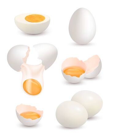 Farm eggs. Realistic chick eggs organic food yellow yolk protein breakfast omelette cracked shell vector pictures. Illustration farm egg, eggshell and yolk