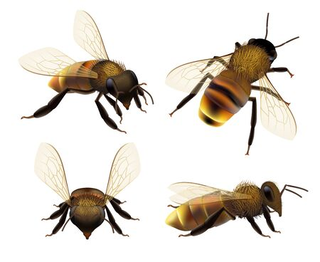 Bee realistic. Wildlife insect honeybee fly danger wasp pollen bugs eco natural product vector collection. Illustration wasp or bee, bumblebee and beekeeping