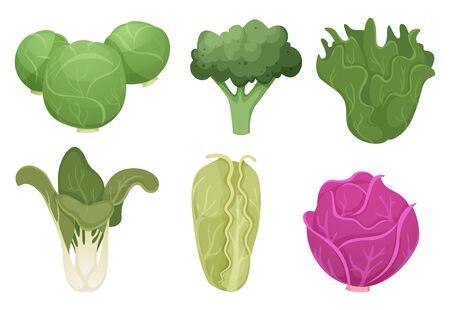 Cabbage cartoon. Green clean vegetable eco food fresh garden broccoli tasty farm cooking vector. Illustration fresh vegetable, natural agriculture, vegetarian ingredient