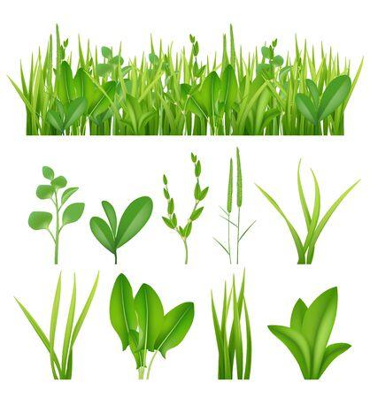 Hierba realista. Ecología establece hierbas verdes hojas plantas vida prados colección de elementos vectoriales. Hierba prado verde, césped verano exuberante ilustración