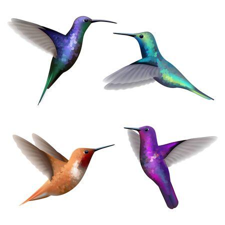 Colibris. Collection d'images réalistes de vecteur exotique de beaux oiseaux volants colorés. Illustration colibri, mouche exotique colibri