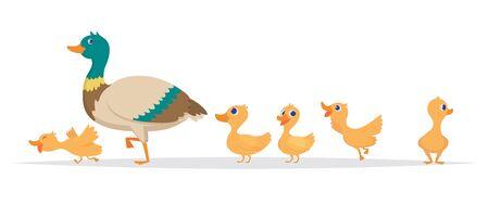 Madre pato. Fila de patos silvestres aves familia caminando colección de dibujos animados de vector. Madre pato, patito salvaje ilustración