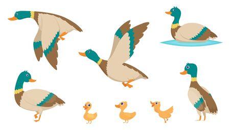 Wild ducks. Young swimming birds water pond little ducks vector cartoon collection. Illustration of mother baby duck, duckling bird cartoon Иллюстрация