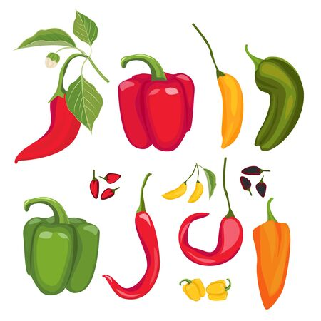 Peppers. Hot spices fresh jalapeno paprika cayenne vector cartoon red peppers collection. Illustration chili spice, red cayenne for spicy