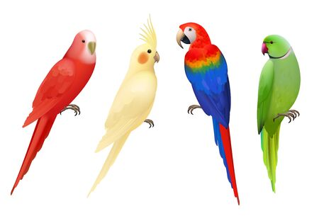 Parrots. Tropical colorful exotic birds macaws nature animals vector realistic parrots collection. Realistic bird parrot, colorful animal fauna illustration