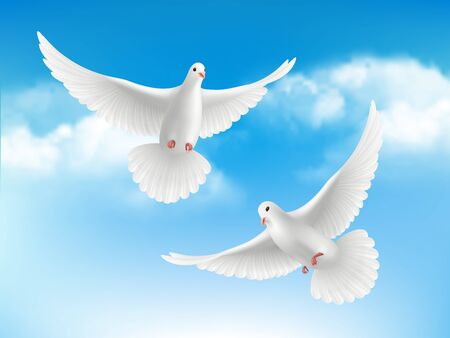 Bird in clouds. Flying white pigeons in blue sky peaceful religion concept with realistic birds vector background. Illustration realistic pigeon, religious symbols bird freedom