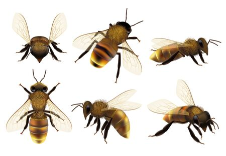 Honeybee realistic. Different wildlife danger insects flying wasp natural botanical fauna vector closeup pictures of bee. Bee wasp realistic, buzzing honeybee illustration Vektorové ilustrace