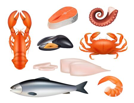 Seafood. Tuna meal fishes shrimps molluscs octopus crab vector realistic natural products. Fish and crab, seafood tuna, fresh squid and mussel illustration