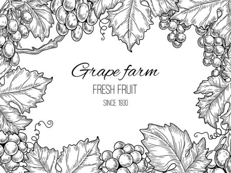 Grape frame. Vineyard vintage vector background with grapevine and leaves. Illustration farm grapevine, vine and leaf banner