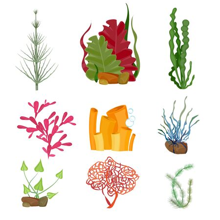 해초. 수중 바다 또는 바다 식물 해양 식물 야생 동물 만화 세트. 식물 수중 수족관 식물, 야생 동물 해초 그림