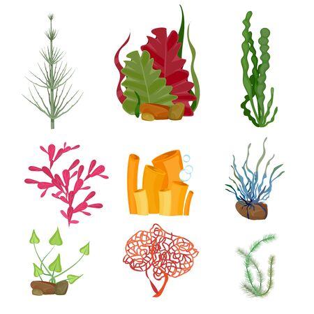 Algue. Ensemble de dessins animés de la faune botanique marine des plantes marines ou de l'océan sous-marin. Plante d'aquarium sous-marin botanique, illustration d'algues de la faune