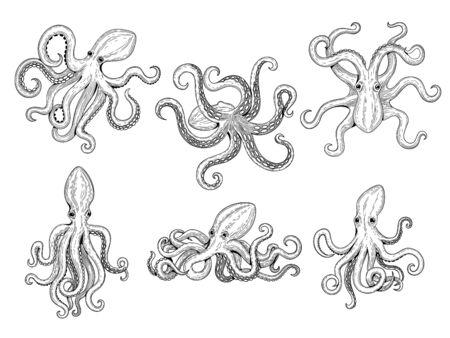 Octopus. Ocean fishes big underwater monster wild squid vector hand drawn marine tattoo template. Illustration octopus ocean, animal monster tattoo