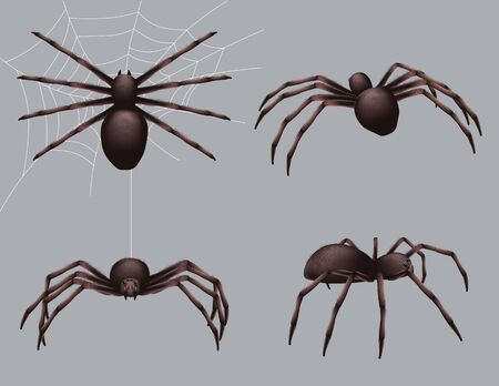 Spider realistic. Nature insects crawl venom black fear spider vector danger collection. Danger insect poisonous, spider crawl illustration Ilustrace