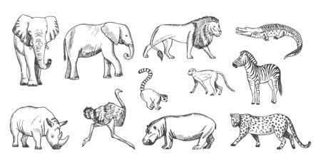 Sketch animal. African wild savanna fauna. Isolated lion, elephant, leopard and crocodile vector illustration. Animal wild, fauna and savanna, zebra mammal and crocodile