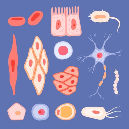 Human cells. Biological structure of blood scenes collection lymphocyte vector flat pictures of cells. Blood structure human, microbiology eosinophil and lymphocyte illustration