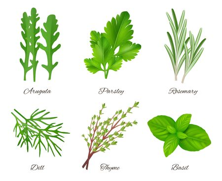 Herbs realistic. Green food species aromatic product ingredients parsley rosemary sage onion vector collection. Cooking herb and leaf, ingredient natural illustration Иллюстрация