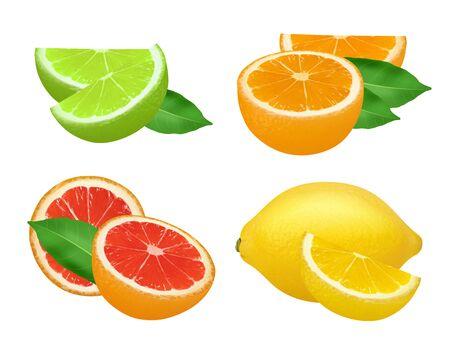 Citrus products. Lime lemon grapefruits and orange natural healthy fruits vector food realistic picture. Grapefruit and lemon, lime and citrus whole illustration Vector Illustratie