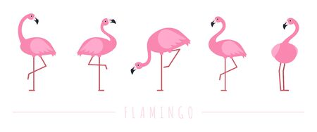 Pink flamingo. Exotic tropical birds characters. Isolated wildlife animals vector set. Exotic wildlife flamingo animal, wild character illustration