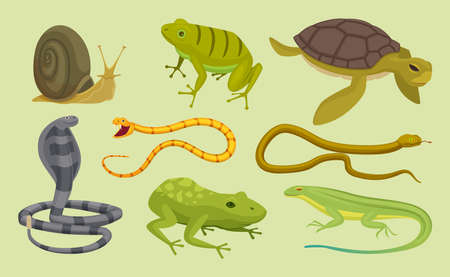 Reptiles set. Lizard snake turtles snail cartoon vector wild animals. Lizard and turtle, snake animal reptile illustration