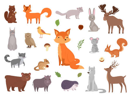 Cute wild animals. Vector forest animals collection fox bear owl vector pictures set. Illustration forest bear and rabbit, collection wildlife squirrel and hedgehog
