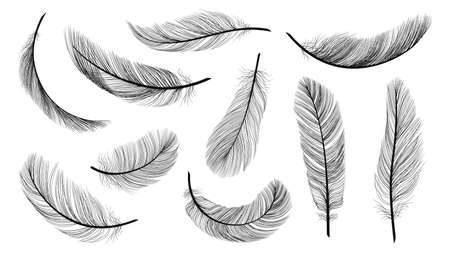 Black feathers. Isolated flying feathering, plumage of black bird vector illustration. Bird plumage and feather isolated, design plume