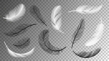 Flying feathers collection. Falling black white feathering isolated on transparent background. Birds plumage vector set. Flying fluffy black and white, quill plumage illustration  イラスト・ベクター素材