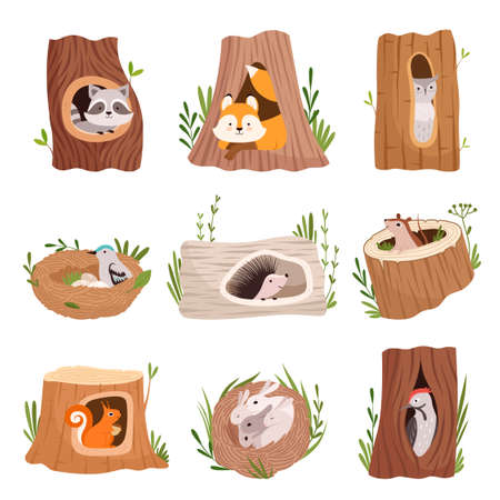 Holes in tree. Home hollow for wild animals trunk leaves treetops birds and squirrel vector characters. Illustration hollow tree in forest, trunk hollowed