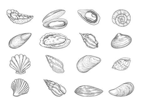 Oyster. Seafood gourmet products natural fresh shells vector doodle collection. Sea menu oyster, cooking delicious or prepared delicacy illustration