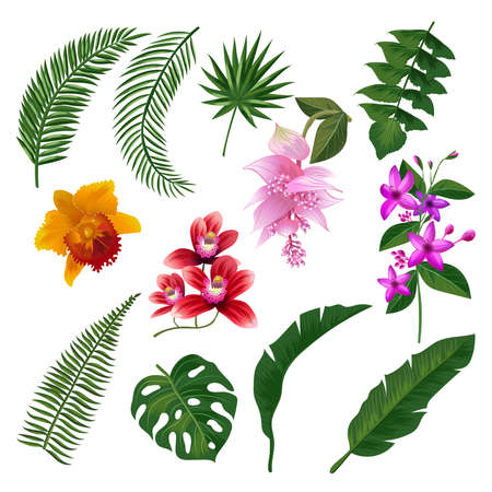 Set of Tropical flowers bouquet. Vector illustration of leaves and branches. Color flower and green plant, summer blossom tropical flower