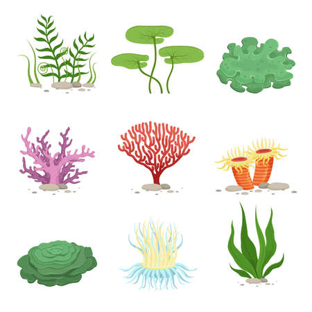 Sea aquatic fauna underwater plants and corals. Vector colorful ocean elements. Marine coral underwater and ocean, nature fauna illustration Vecteurs