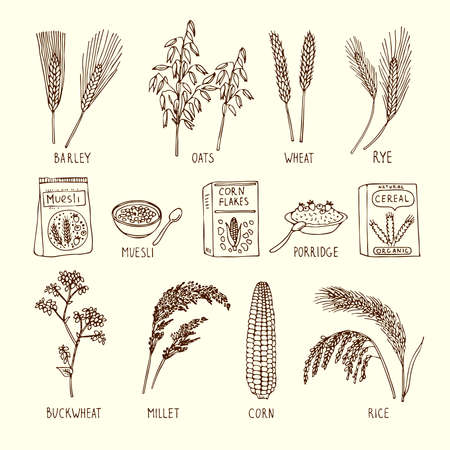 Vector set of different cereals. Muesli, wheat, rice and others. Hand drawn illustration. Natural agriculture ingredient, vegetarian nutrition product