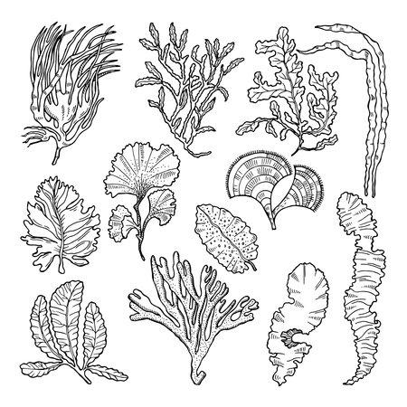 Marine sketch with different underwater plants. Underwater sea plant sketch, vector illustration Ilustracje wektorowe