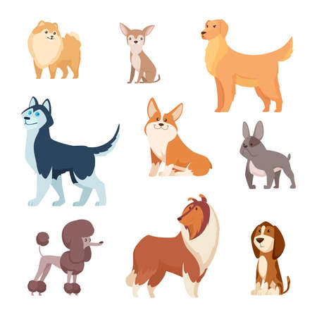 Dogs breeds. Funny true and faithful animals playing in various poses cartoon puffy puppy poodle bulldog dachshund exact vector illustrations collection. Pet dog animal, funny puppy cartoon