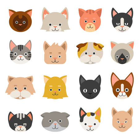 Different faces of cats