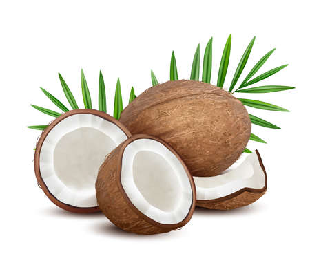 Coconut. Fresh tropical opened coco fruit with milk and palm green leaves vector natural dessert. Coconut fruit and green leaf palm, exotic coco illustration Vector Illustration