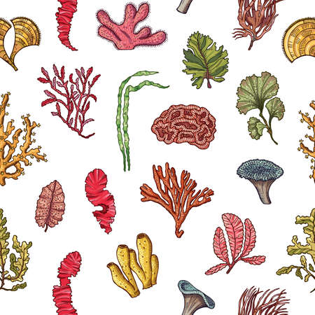 Vector hand drawn seaweed elements pattern or background illustration. Seaweed underwater background for aquarium
