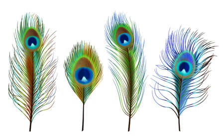 Peacock feathers. Exotic tropical birds beautiful colored feathers decent vector realistic collection Stock Illustratie