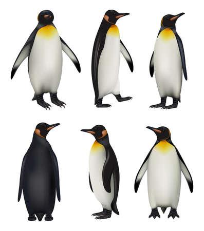 Penguins. Antarctica wildlife king penguins in realistic style cold environment decent vector illustrations Stock Illustratie
