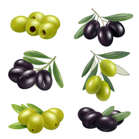 Green olives. Closeup greece authentic food olives branches products ingredients decent vector illustrations set