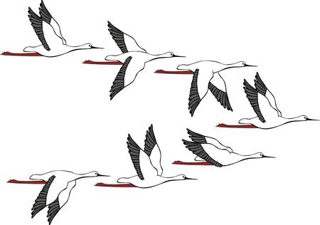 Flying flight of cranes on white