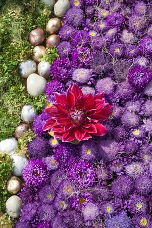 Flowerbed  with violet asters and gold stones
