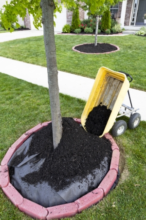 Dumping Mulch around the trees and shrubs, yard maintenance is fun. Weed barriers are very useful. photo