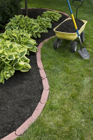 Mulching bed around hostas and wheelbarrel along with a showel. photo