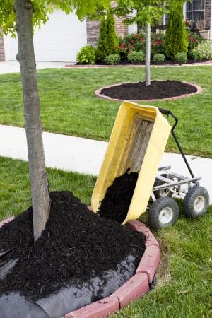 paysagiste: Embellissement du quartier commence par une opération de paillage autour des troncs d'arbres.